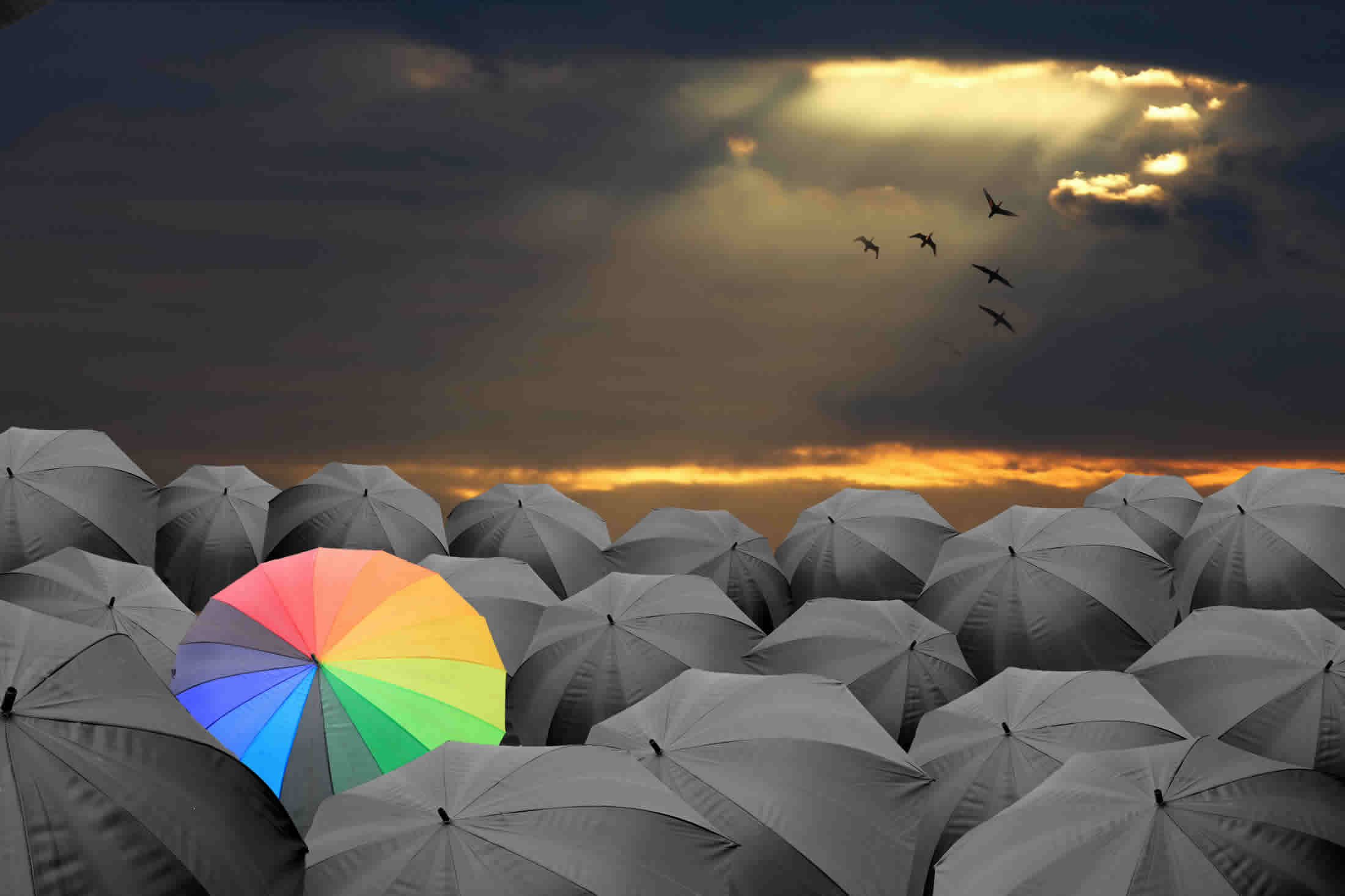 colourful umbrella amongst black umbrellas